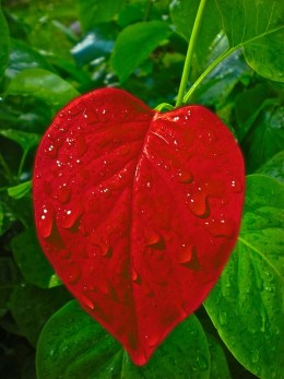 God's love is gentle like the rain.