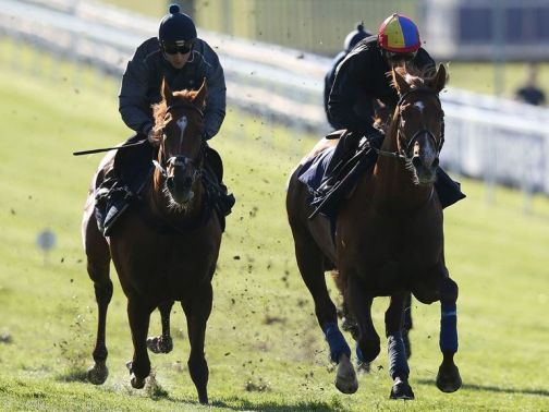 Wings Of Desire (right) has been supplemented for the Derby