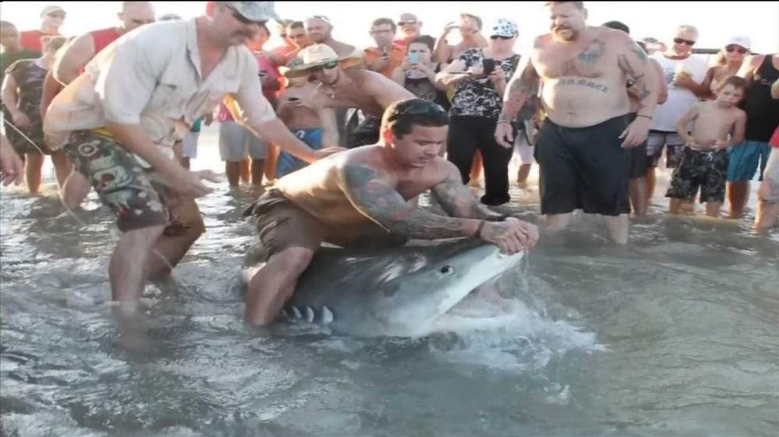 Mexico Beach Giant Chair Massive Tiger Shark Caught On Texas Beach