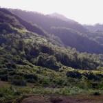 Climbing Mt. Ampacao