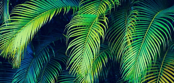 palm-tree-paradise.png