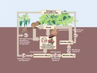 Carbon Cycle Photosynthesis Decomposition Respiration