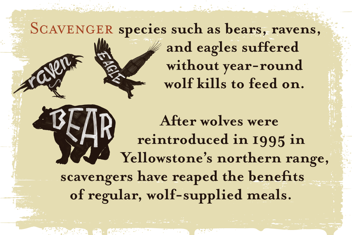 Wolf Range 48 Infographic: Wolves Keep Yellowstone In The Balance
