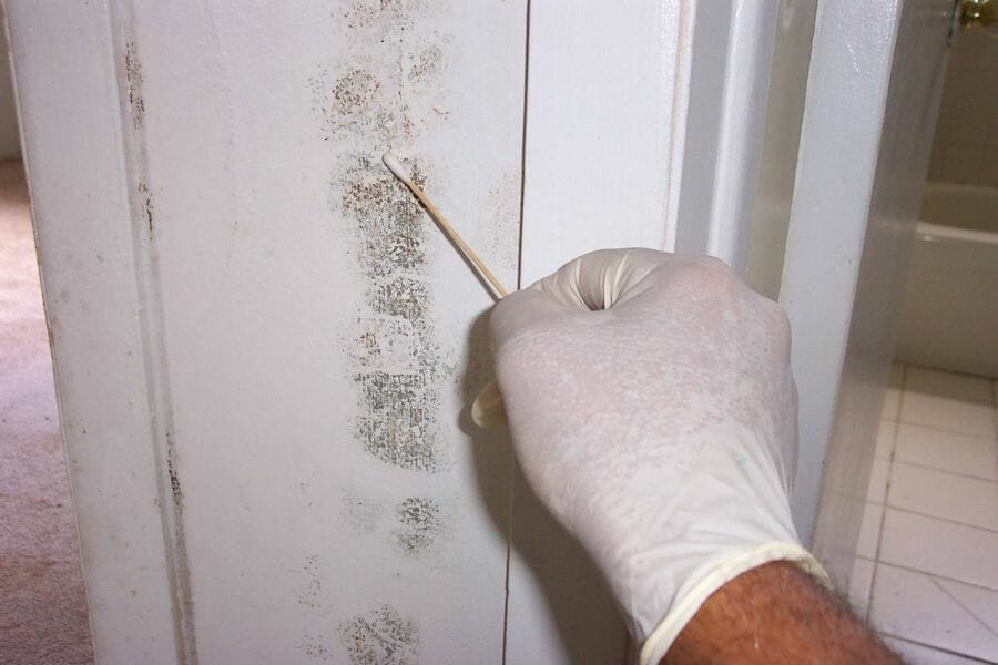 How Toxic Mold Can Affect Your Health, Residential Guide On Mold Remediation
