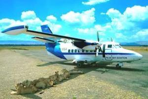 lions-shade-on-airplane-masai-mara-airstripe
