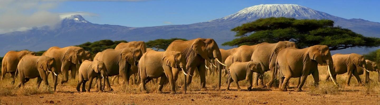 Slide-Elephants-Amboseli