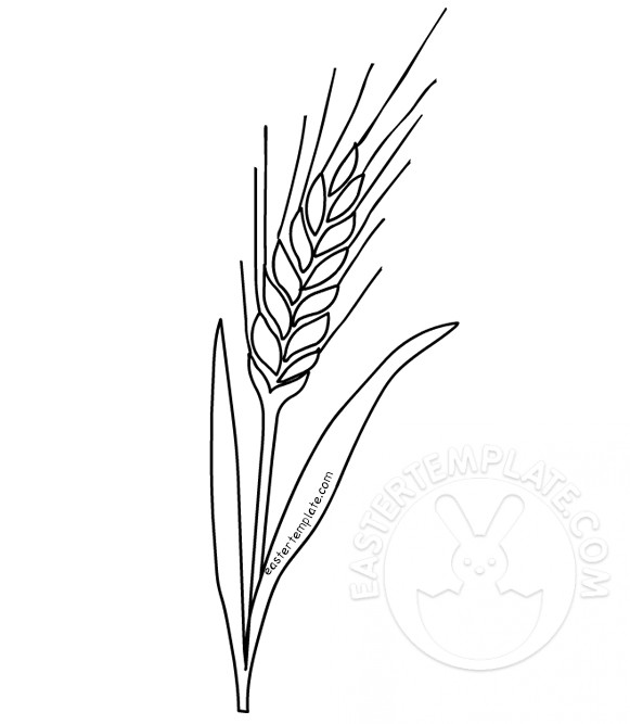 Wheat coloring page First Communion Easter Template - wheat template