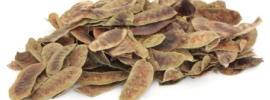 dried senna pods