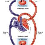 How To Improve Blood Circulation? 25 Ayurveda And Yoga Tips