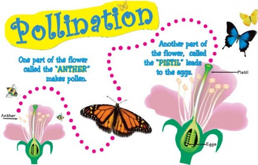 Pollination and Fertilization Facts for Kids
