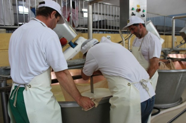 Cutting the cheese twins into two girl cheeses (if only one cheese is made in a tub it is called a boy) in the parmigiano reggiano dairy