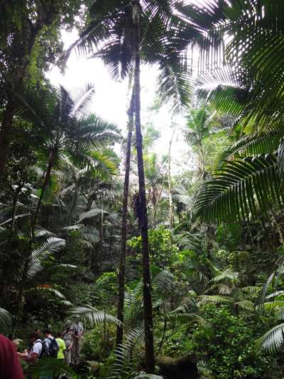 views from within the rainforest