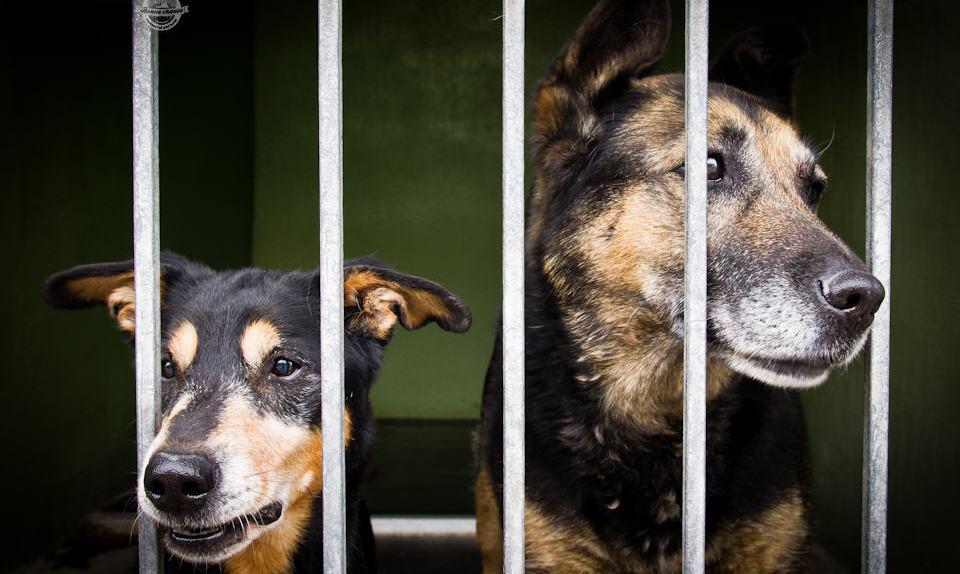 Kennel grids in a dog pound