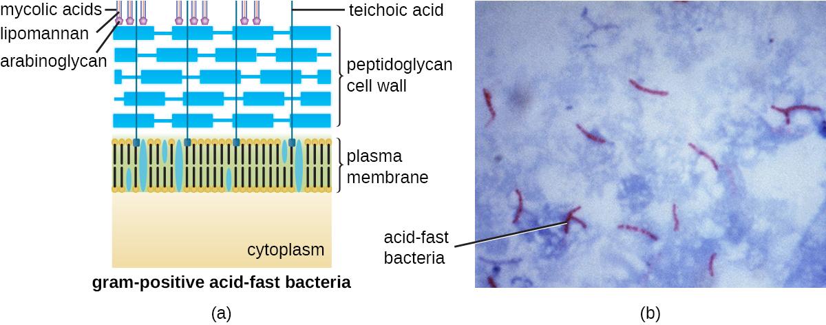 33 Unique Characteristics of Prokaryotic Cells \u2013 Microbiology