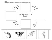 Butterfly Life Cycle Worksheet by The Artful Classroom | TpT