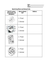 Comparing Plant and Animal Cells Worksheet by Geekology | TpT