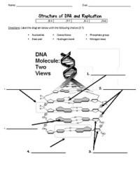 Dna Worksheets - Kidz Activities
