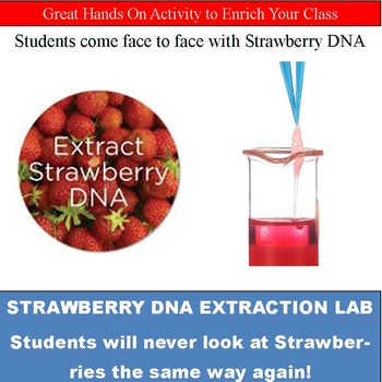 Strawberry DNA Extraction Lab by Learning with Limes TpT