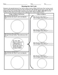 Drawing the Cell Cycle Worksheet by Ian Keith | Teachers ...