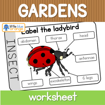 Insect Body Parts Worksheets  Teaching Resources TpT