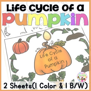 FREE) Life Cycle of a Pumpkin by Pre-K Learning Circle TpT