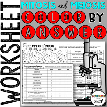 Mitosis Vs Meiosis Worksheets  Teaching Resources TpT
