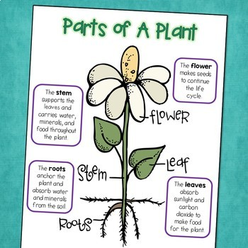 Plant Life Cycle Science Posters with Parts of a Plant