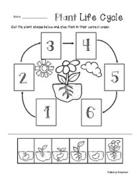 Plant Life Cycle - Cut / Paste Worksheet by Beached Bum ...