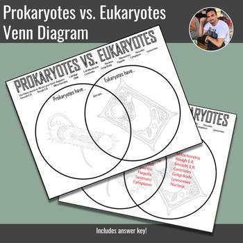 Prokaryotes vs Eukaryotes Venn Diagram by Mr Earp from Bio TpT