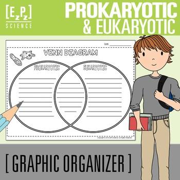Prokaryotic and Eukaryotic Cells Venn Diagram Graphic Organizer by