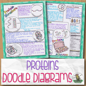 Proteins and Protein Structure Biology Doodle Diagram by Science