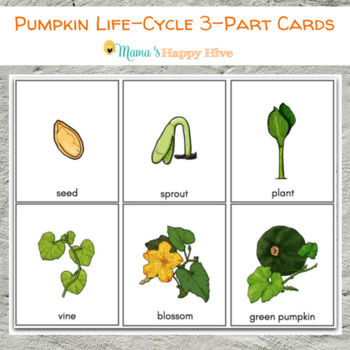 Pumpkin Parts and Life-Cycle 3-Part Cards TpT