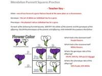 Mendel Punnett Square Worksheet - Kidz Activities