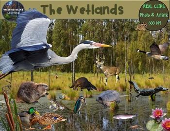 Wetlands Animals Clip Art Habitat Biome Real Clips Photo