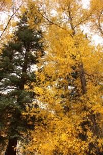 Gunnison National Forest
