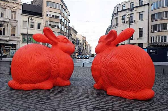 big rabbits4