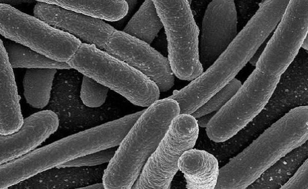biofuel production from bacteria