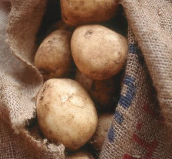 making bio plastics from potatoes