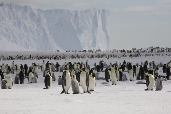 Scientists count penguins from space