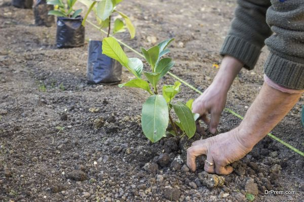Garden worker hands carefully plant at the new apartment block. Hands covering a newly planted with dirt.