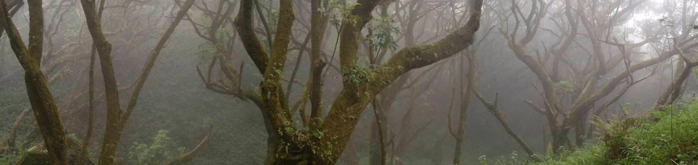 Bosque-niabiyan