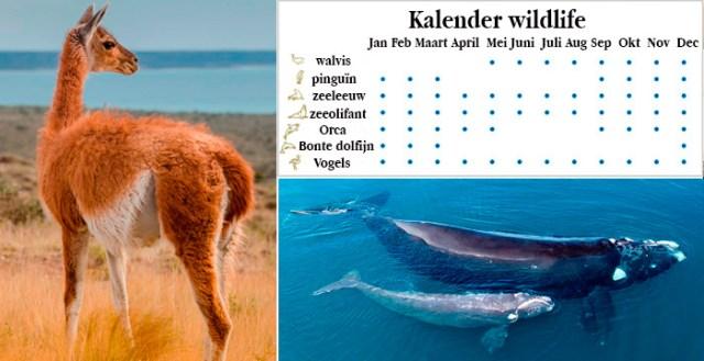faunakalender schiereiland Valdes Wild van