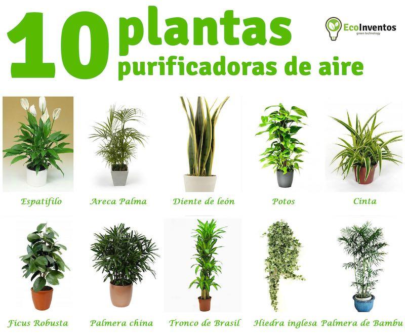 10 plantas que purifican el aire de tu casa for 5 nombres de plantas ornamentales