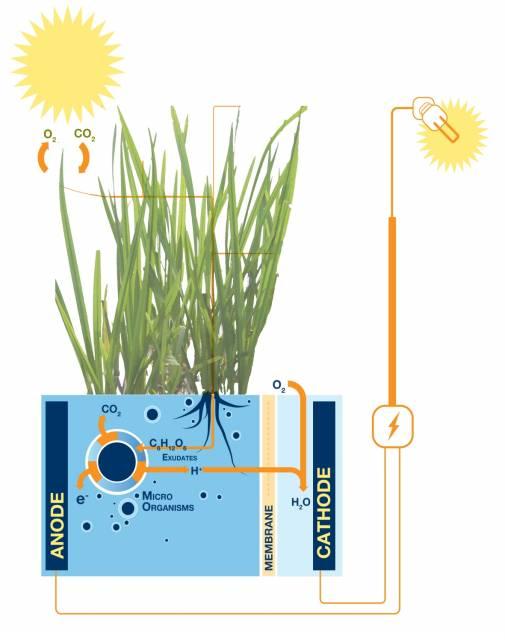 de generación de electricidad que implica el cultivo de plantas en