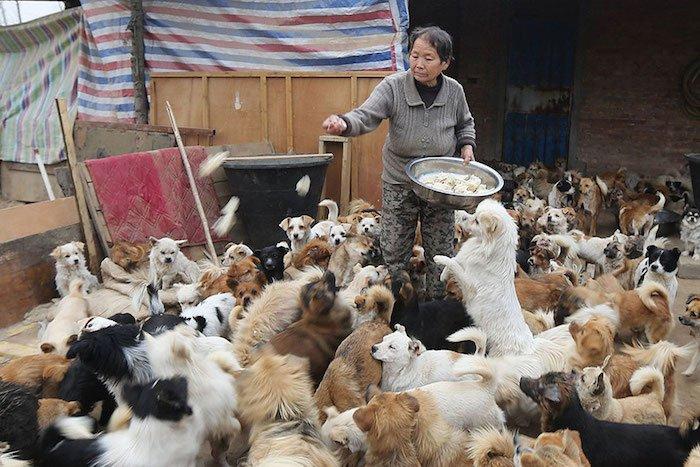 Qué hacer ante un caso de maltrato animal Estas-mujeres-chinas-se-despiertan-a-las-4-de-la-ma%C3%B1ana-para-alimentar-a-1300-perros-callejeros