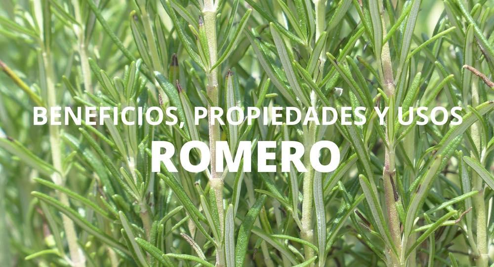 Beneficios, propiedades y usos del Romero