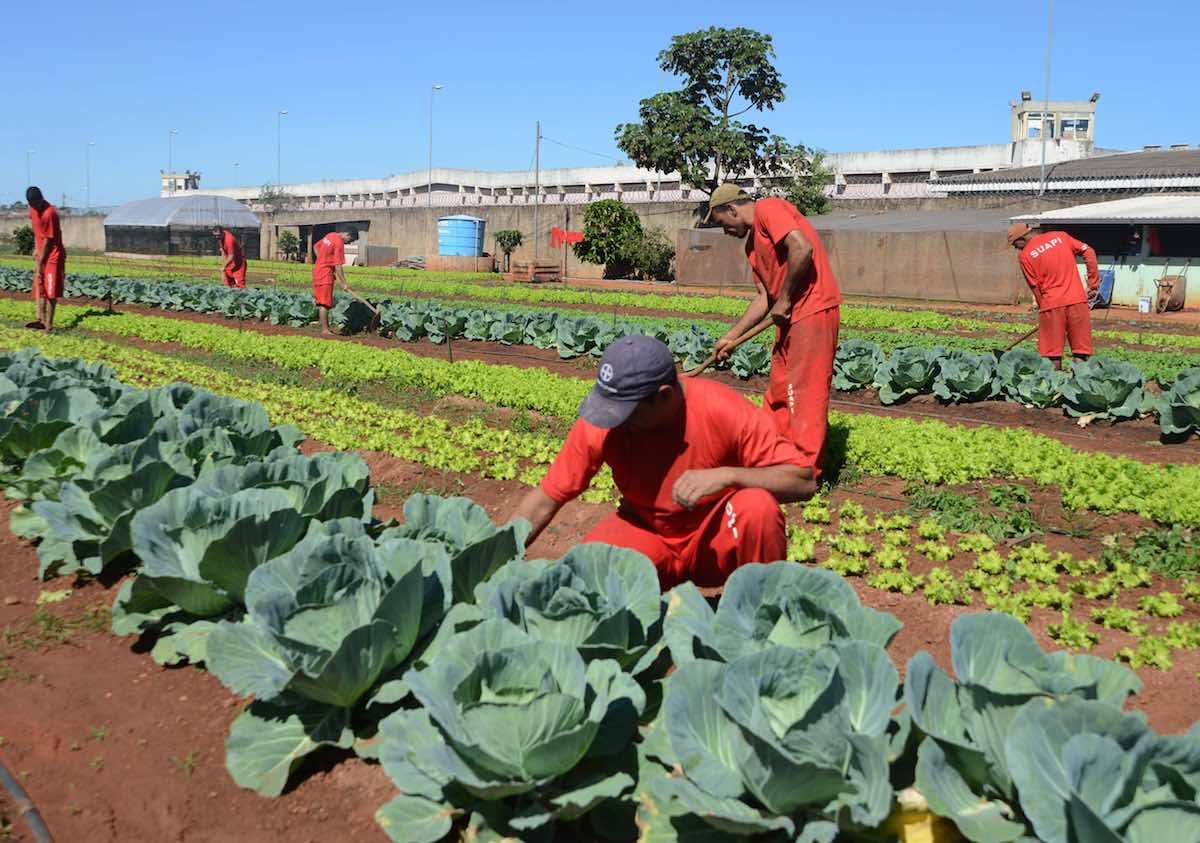 En esta prisión los presos cultivan sus propios alimentos
