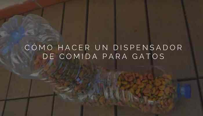 Dispensador de comida para gatos, con botellas recicladas