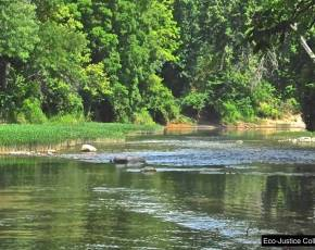 The river supports a variety of aquatic life, including over 57 species of fish..  Photo by Pam Richart, Eco-Justice Collaborative.  August 2014.