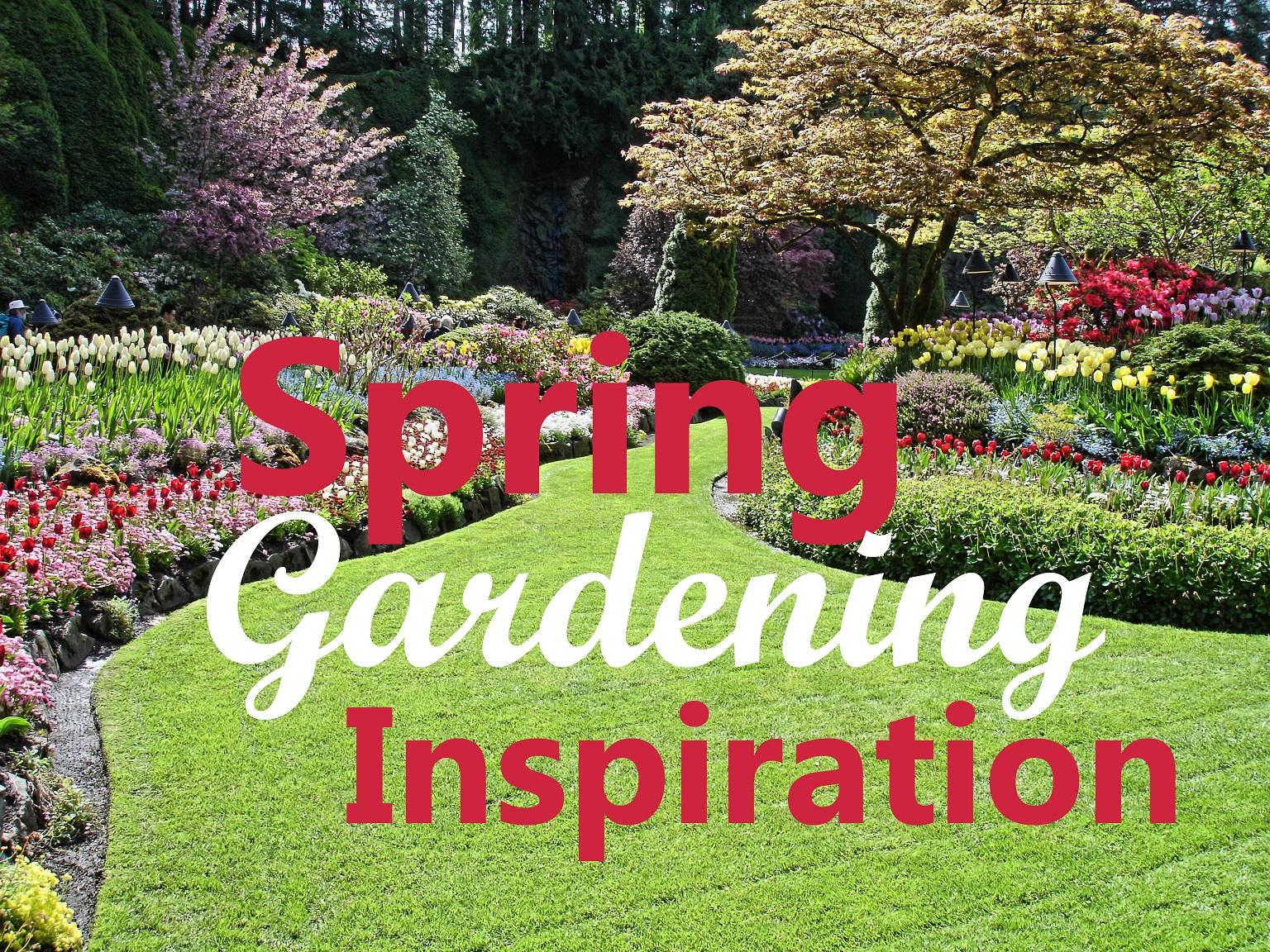 Fullsize Of Backyard Gardening Blog